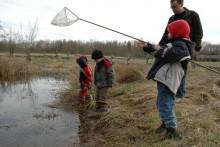 Exkursionen zum Kennenlernen von Insekten und wirbellosen Tieren für Kinder und Erwachsene (Foto Dirk Pfuhl/dirkpfuhl.de)